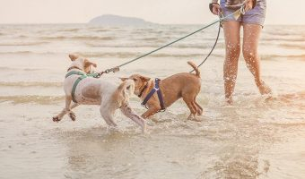 Best-Waterproof-Dog-Collars